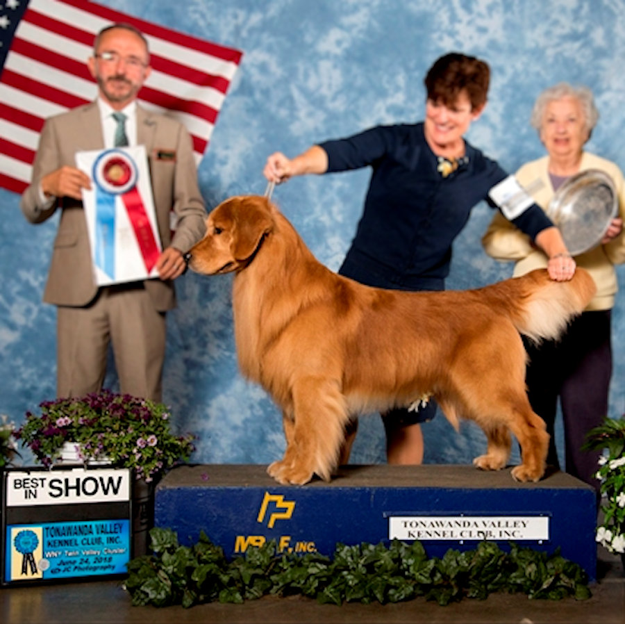 Conformation – Royal River Retrievers – Golden Retriever Puppies in Maine  and New England
